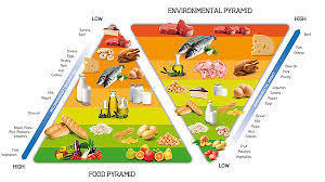 DOUBLE PYRAMID MODEL OF NUTRITION AND SUSTAINABILITY | LOCAL HEALTH TRADITIONS | Scoop.it