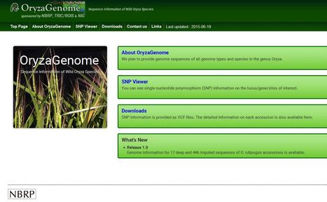 OryzaGenome: Genome Diversity Database of Wild Oryza Species | Rice Blast | Scoop.it
