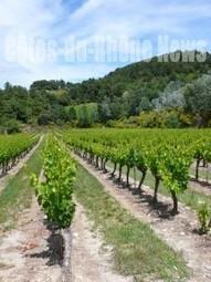 Rendez-vous gourmands de l'été et accord mets-vins en Vallée du ...   accord mets vins   Scoop.it