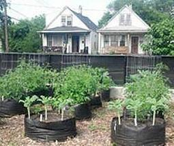 Urban agriculture: The potential and challenges of producing food in cities | Agriculture | Scoop.it