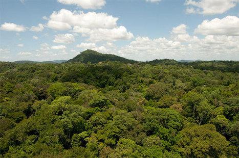 La forêt amazonienne est-elle bien un puits de carbone ? - notre-planete.info | consultant en stratégies digitales et éditoriales | Scoop.it