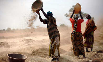 New ideas put agriculture co-operatives at the heart of rural development - The Guardian | Peer2Politics | Scoop.it