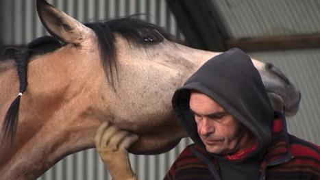 Alain Cavalier – Un lien charnel entre l'homme et son cheval – L'Actualité Poitou-Charentes | L'Actualité | Scoop.it