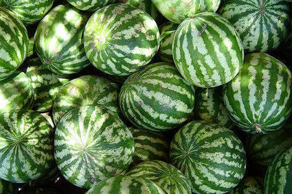 Watermelons Were Used As Jugs Before - FruitLush.com | Health and Fitness Articles | Scoop.it