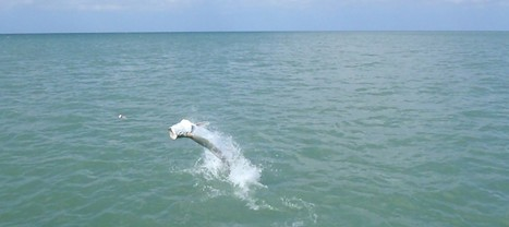 How To Find A Yacht Rental In Miami To Fish For Tarpon This Week | General News | Scoop.it