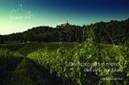 Chi sono i protagonisti del terroir? | vinokultura | Scoop.it