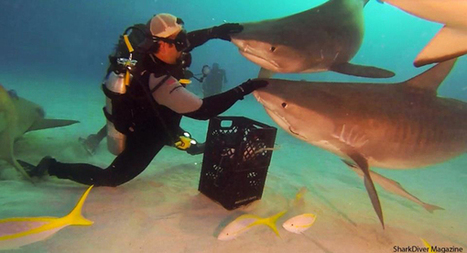 News from Shark Diver Magazine   All about water, the oceans, environmental issues   Scoop.it