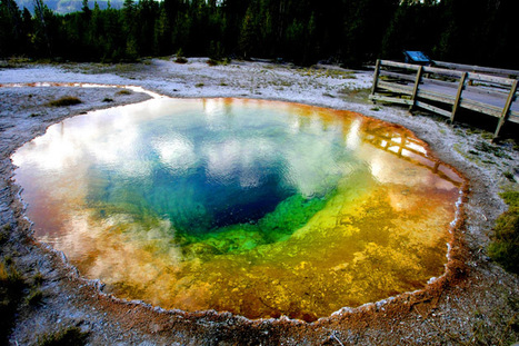Yellowstone National Park in the summer | Epic pics | Scoop.it