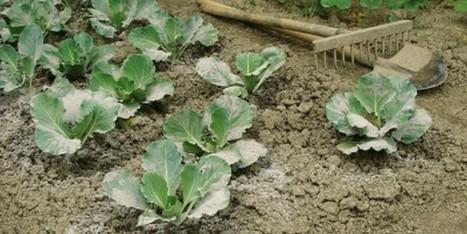 Comment utiliser les cendres au jardin ? | Les colocs du jardin | Scoop.it
