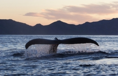 Extinction Risk for Marine Life Up 25 Percent - Nature World News | Seahorse Project | Scoop.it
