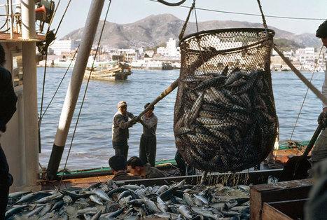 Centre d'actualités de l'ONU - FAO : la pisciculture assurera près des deux tiers de la production mondiale de poisson d'ici 2030   aquacultures   Scoop.it