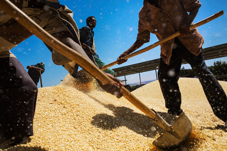 How Will We Feed a World of Nine Billion People? | Sustain Our Earth | Scoop.it