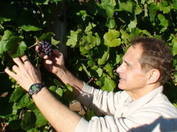 Slowing Cellular Aging - With Resveratrol - Dr. Maroon   Corporate Finance   Scoop.it