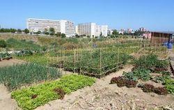 L'agriculture urbaine est sortie de l'utopie | Sécurité sanitaire des aliments | Scoop.it
