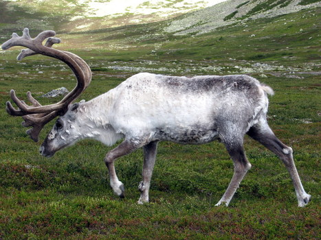 The Science Behind Reindeer's Color-Changing Eyes | Popular ... | The Art of Technology | Scoop.it