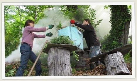 L'arbre aux abeilles - Ruche tronc et abeille noire - Dernières nouvelles | Les colocs du jardin | Scoop.it