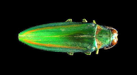 The Preservation of Colors in Fossil Insects | Learning about Geology | Scoop.it