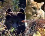 Now Showing–Predator DefenseFilms! | The Wild Planet | Scoop.it