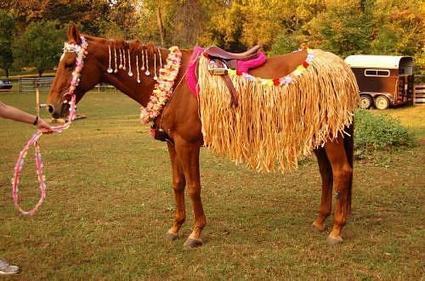 Hula Dancer Halloween Horse! | Horse and Rider Awareness | Scoop.it