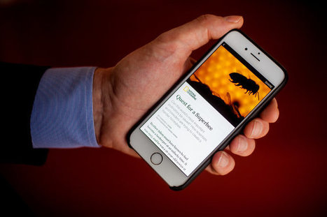 Facebook Begins Testing Instant Articles From News Publishers   Internet Data   Scoop.it