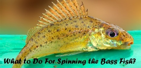 What to Do For Spinning the Bass Fish? | Fishing Spot App | Scoop.it