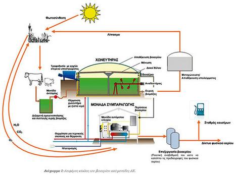 Βιοαέριο & Κτηνοτροφία συνεπάγεται Αειφορία | Βιομάζα | Scoop.it