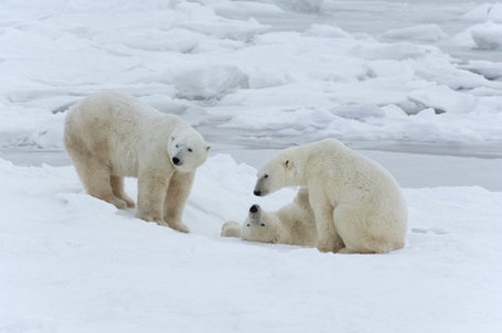 Wealth Polar Bear Trophy Hunters: Kill Now, Get Permission Later | Trophy Hunting: It's Impact on Wildlife and People | Scoop.it