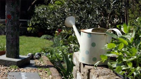 Gardening tips: seed saving for beginners – video | Healthy Food | Scoop.it