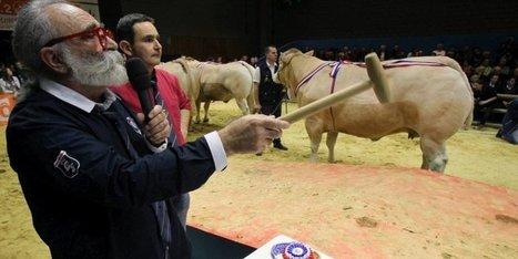 Salon de l'agriculture : le point sur les animaux primés du Sud-Ouest - Sud Ouest | Agriculture en Gironde | Scoop.it