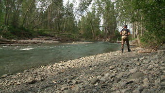 King Salmon Numbers Show Promise for the Future of Ship Creek - KTUU.com | Fish Habitat | Scoop.it