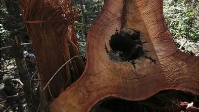 Amazon destruction up by 28% in year | Development Economics | Scoop.it