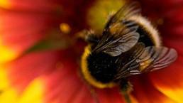 Pero... ¿cómo se le pone una antena a una abeja? - BBC Mundo | Apicultura Investigación | Scoop.it