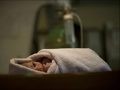 Gosnell 'Story' Not New, Babies Born Alive Left to Die for Years | Neonatal Nursing | Scoop.it