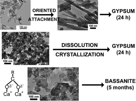 CaSO4 Mineralization in Carboxy- and Amino-Functionalized Reverse Micelles Unravels Poorly Hydrated Nanophases (Bassanite) | Mineralogy, Geochemistry, Mineral Surfaces & Nanogeoscience | Scoop.it