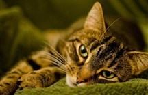 Search is on for lost cat at JFK's Terminal 4 | Ask The Cat Doctor | Scoop.it