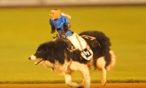 STOP Wilmington Blue Rocks' Cruel 'Monkey Rodeo' | Nature Animals humankind | Scoop.it