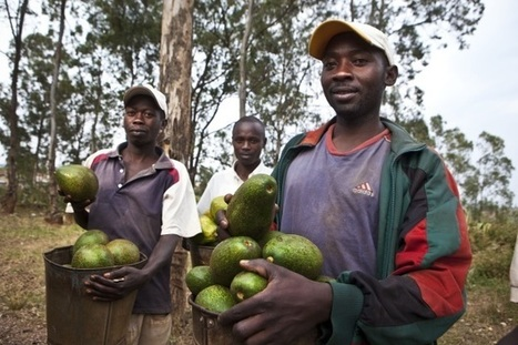 Hungry farmers - we can reverse the trend | BTC blog by Prudence Uwabakurikiza | International aid trends from a Belgian perspective | Scoop.it