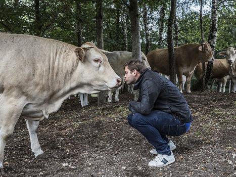 Gastronomie Le boucher qui parle à ses vaches - Vsd   Boucher Information Communication Boucherie Nationale et Internationale   Scoop.it