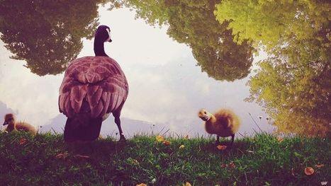20 photos incroyables prises avec un iPhone! - Rtbf | Social Media | Scoop.it