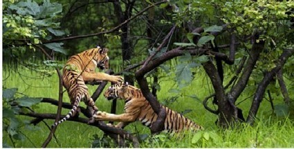 India's National Parks - Maintaining the Ecological Balance | Adventure Destinations in India | Scoop.it