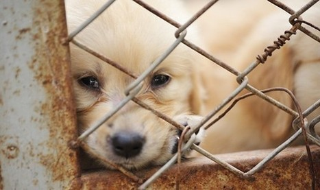 Anti-Puppy Mill Ordinance Passed In Chicago | Nature Animals humankind | Scoop.it