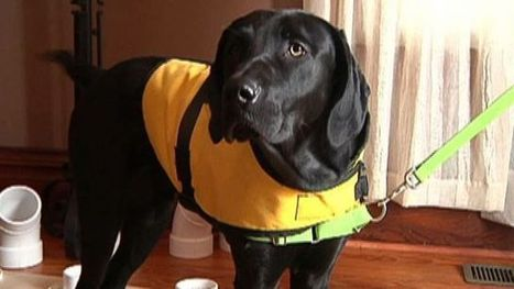 Couple trains their own diabetes-sniffing dog - Fox News | Diabetes - Making Better Choices | Scoop.it