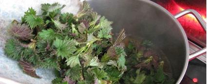 Como hacer un pesticida y fertilizante natural para plantas?   Noticias de ecologia y medio ambiente   EcoPaideia   Scoop.it