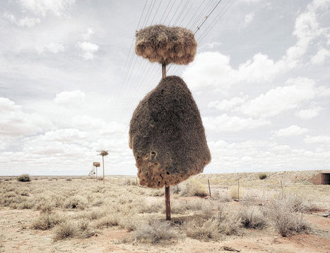 World's largest nests are made by socialist bird collectives | Amazing Science | Scoop.it