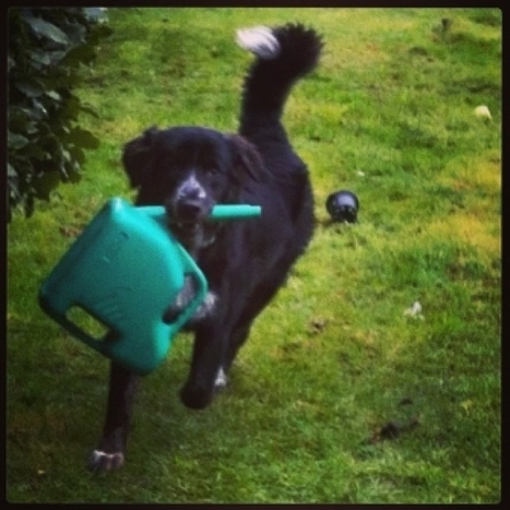 14 Things Dogs Do Better Than Anyone | My Favs on Web | Scoop.it