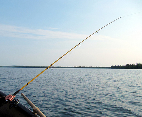 DNR to ban the use of lead in fishing bait - The Badger Herald | Social Media | Scoop.it