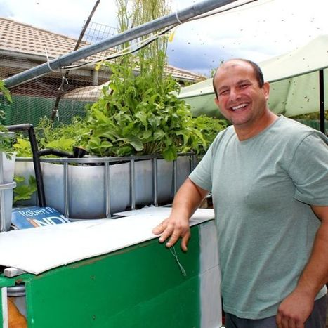 Backyard aquaponics make a splash in suburban Canberra | Food Energy Water Nexus | Scoop.it