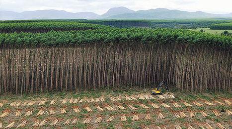 ¡Las plantaciones NO son bosques! | Agua | Scoop.it