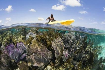 10 Great Places to See Coral Reefs Slideshow