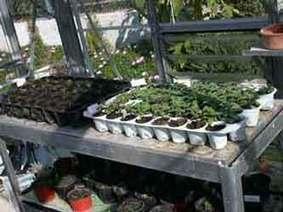Reproducción por semillas de Plantas de interior: semilla, siembra, semilleros... | Flores y plantas | Scoop.it